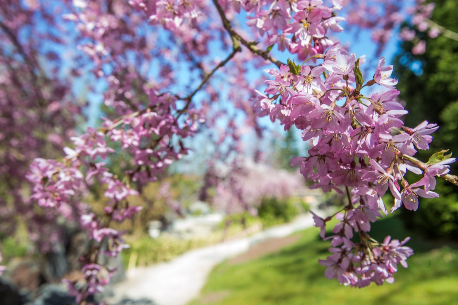 BUGA 2021 Erfurt, japanischer Garten egapark